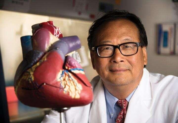 科学家通过注射过度表达细胞周期蛋白D2的心肌细胞来帮助心脏病发作恢复