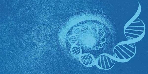 与发育性协调障碍 使用障碍的初步遗传联系
