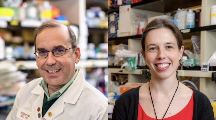 路德维希癌症研究表明新型药物筛选如何使癌症治疗个体化