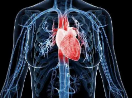 心脏移植:年龄不是成功手术的障碍