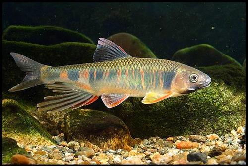 新的浸渍解决方案将整条鱼变成有价值的食物