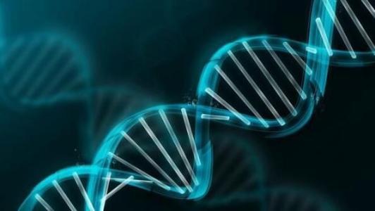 DNA修复与昼夜节律有关 而优化治疗方法