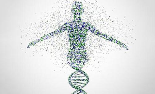 中国科学家完成了抗疟植物的基因组测序