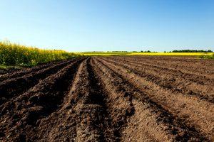土壤作为一种珍贵的商品