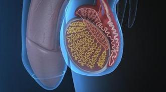 宾夕法尼亚大学的研究人员获得540万美元 用于寻找睾丸癌的遗传风险标记