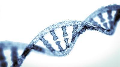 新的研究挑战声称外源RNA对精子功能至关重要