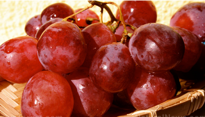 白藜芦醇可改善酒精性肝脂肪的保肝作用