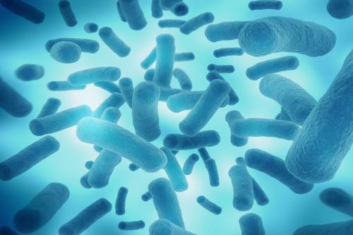 膳食质量影响人结肠粘膜中的微生物组成