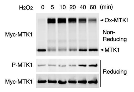科学家阐明活性氧诱导细胞死亡和炎症的机制