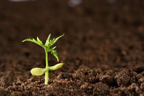 在土壤中添加污水污泥不会增强抗生素耐药性