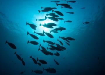 生活在几乎缺氧的海洋部分中的某些微生物如何繁衍生息