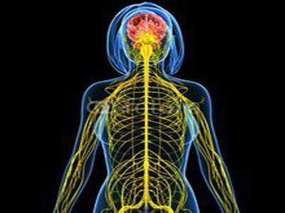 大脑区域帮助我们在熟悉的地方四处走走