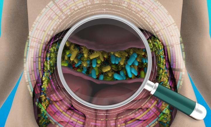 科学家将人类肠道微生物组的所有已知细菌基因组整理到一个大型数据库中
