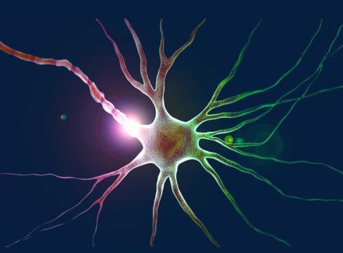 一项新的研究揭示了负责光信号传导的 的意外特性