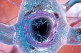 阿尔茨海默氏病背后有毒蛋白质的科学家ID发生