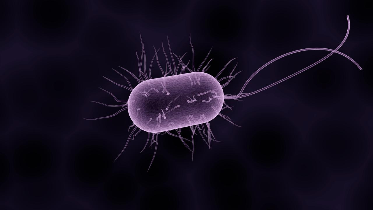 一半的狼疮皮疹含有高水平的细菌可引起感染