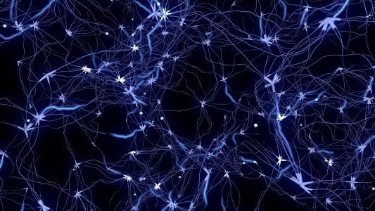 神经元预计人体对食物和水的反应