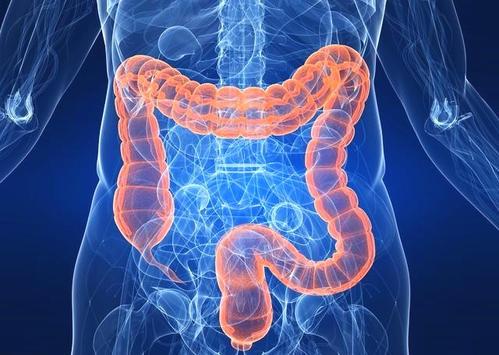 肠道通过相通的神经元与整个大脑沟通