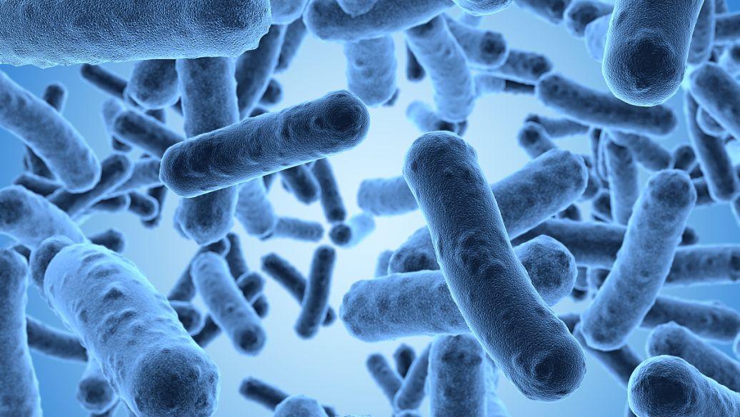 研究提示性与微生物压力反应之间存在机械联系