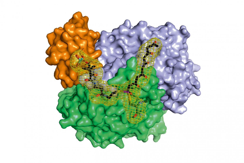 细菌是如何积累天然产物的
