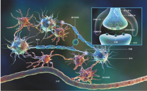 研究人员发现果蝇将感觉神经元与睡眠周期调节联系起来