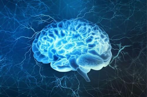 BU神经科学家检查大脑区域独立和集体起作用的方式