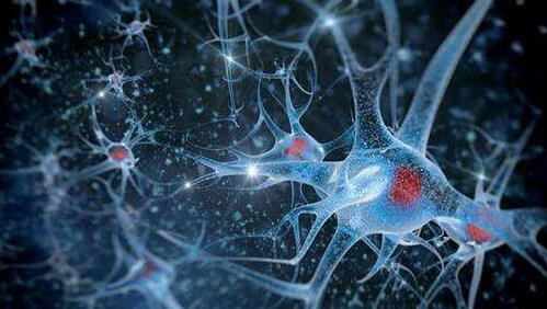 研究人员发现视神经中的干细胞可以保持视力