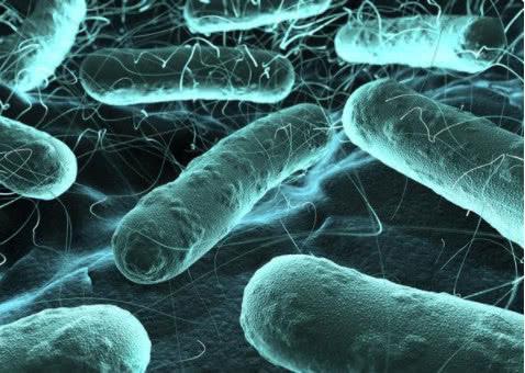 研究人员描述了一种独特的系统用于测试窄波紫外线是否能很好地杀死细菌