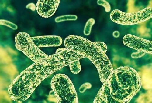 他汀类药物可能会促进健康的肠道微生物