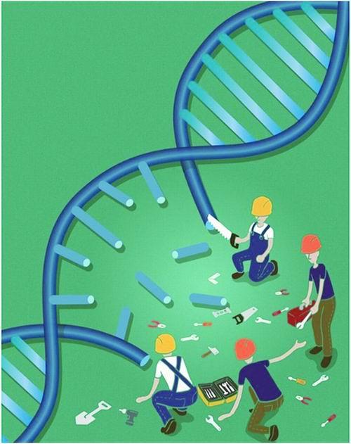采用新方法阻止DNA修复的药物在首次临床试验中显示出希望