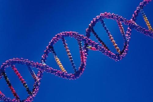 一项新的研究表明DNA与RNA一起制造了地球上的生命