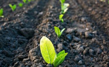 研究表明使用有机肥料处理后的土壤会更健康
