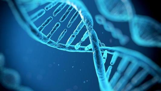 14-3-3sigma基因将充当肿瘤抑制因子