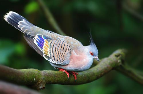 研究人员将鸟类的大脑活动转化为歌曲
