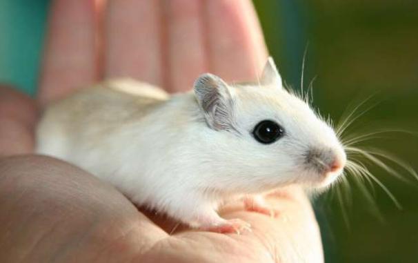 mRNA疫苗对小鼠的疟疾产生全面保护