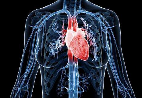 科学家使用石墨烯相机捕捉跳动心脏的实时电活动