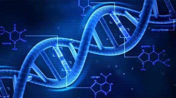 抑制一种促进DNA修复的蛋白质以加强化疗