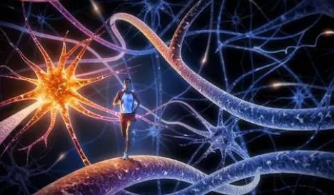 适应不良消费的三系统神经模型
