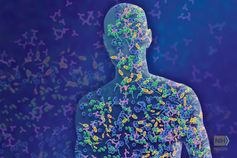 NIH 科学家描述了内部和外部微生物群之间的多界对话