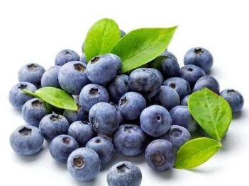 牛奶蛋白可以帮助提高蓝莓的健康