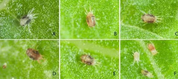 新的气味受体可以揭示驱除害虫的新方法