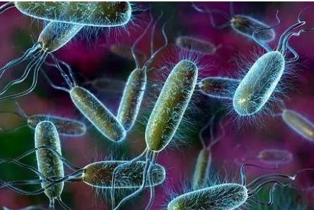 荷兰研究发现兽医工作人员中常见抗生素抗性细菌