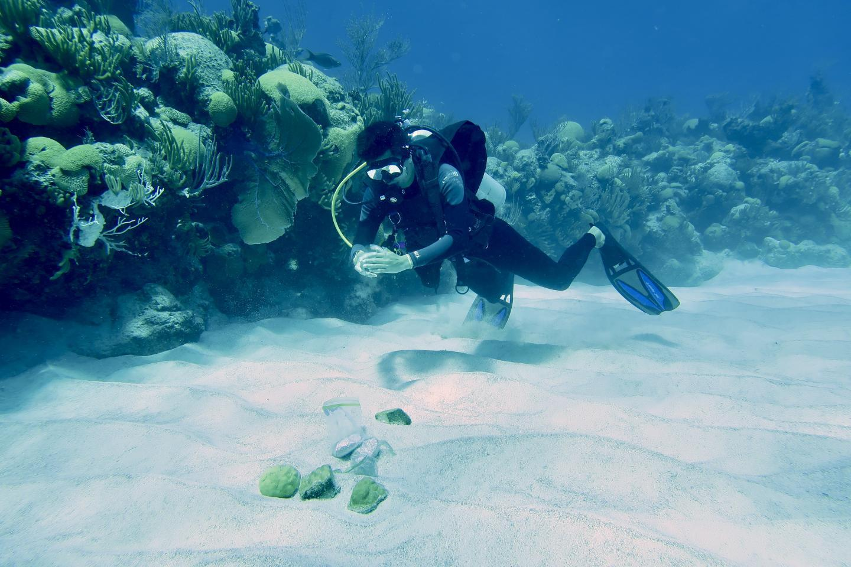 父母暴露于强烈的环境压力对珊瑚后代生理的影响
