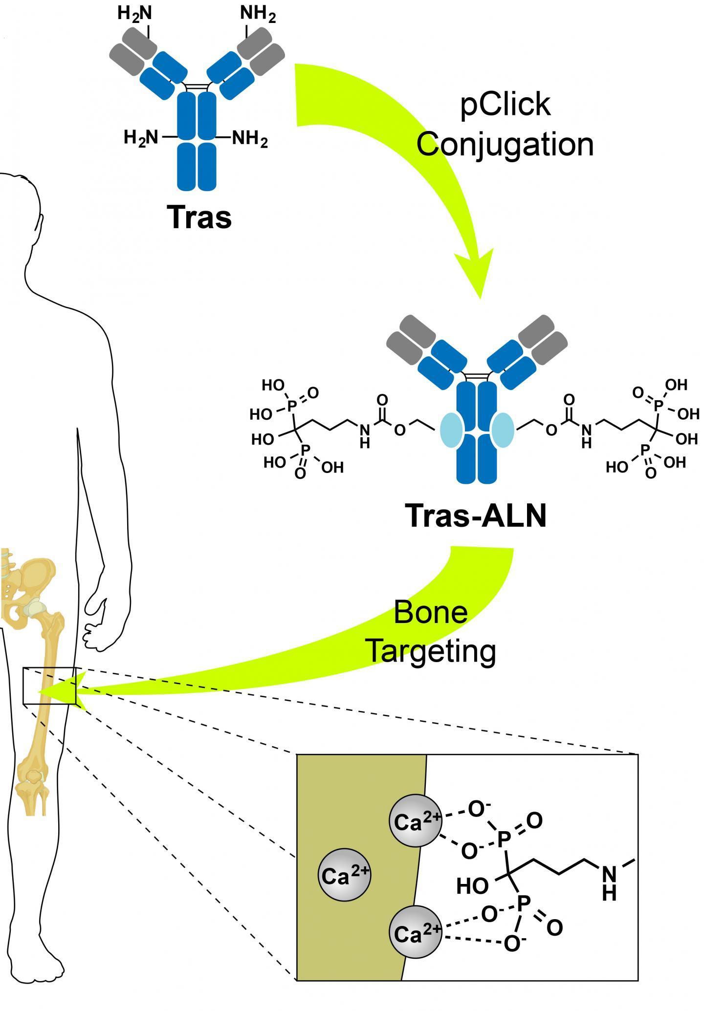 药物对骨癌和转移的影响翻倍