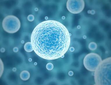 加州大学洛杉矶分校的研究揭示了如何训练免疫细胞来对抗感染