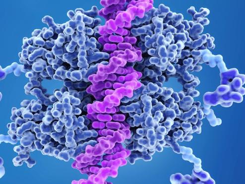 仅针对癌症靶向递送治疗性RNA不会对健康细胞造成伤害