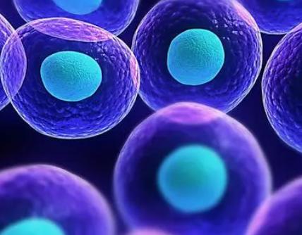 一种用于胚胎规模与单细胞空间转录组学的新方法
