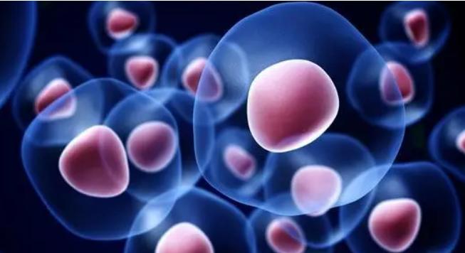 未折叠蛋白如何诱导程序性细胞死亡