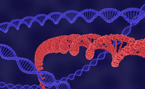 靶向致病细菌中的RNA序列可以使它们对抗生素更敏感