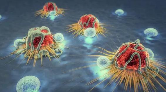 人类急性运动对癌细胞生长的影响